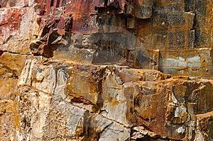 Fossil- Surface Trä Arkivfoton - Bild: 13563393