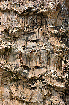 Wood Fossil Surface As Layer Stock Photo - Image: 13563420
