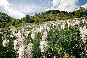 Flowery Meadow In Mountainous Region Blue Sky Royalty Free Stock Photos - Image: 13566398