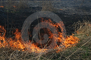 Burn Out Grass Royalty Free Stock Image - Image: 13566736