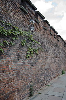 Ivy And Camera On Red Bricked Wall. Royalty Free Stock Photography - Image: 13568597