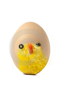 Chick On Egg Royalty Free Stock Photos - Image: 13571438