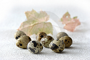 Quail Eggs Royalty Free Stock Photo - Image: 13571615