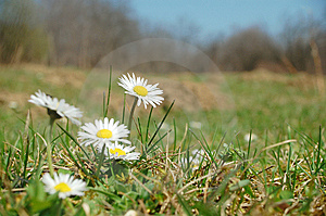 Spring Flowers Royalty Free Stock Photo - Image: 13590635