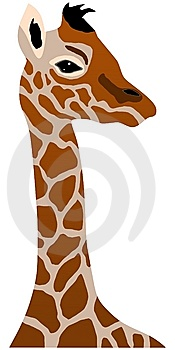 Giraffe Cub Stock Photos - Image: 13591503