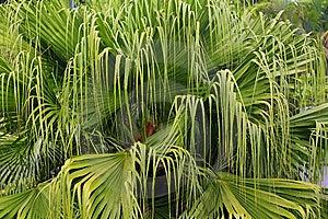 Palm Tree Stock Photos - Image: 13591813