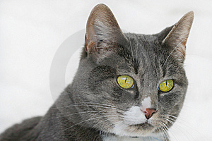 Cat's Face Royalty Free Stock Photography - Image: 13595587