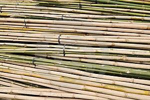 Bamboo Stalks In Bundle Stock Image - Image: 13598691