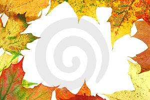 Struttura #3 delle foglie Fotografia Stock