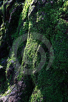 Moss Stock Photos - Image: 13609463