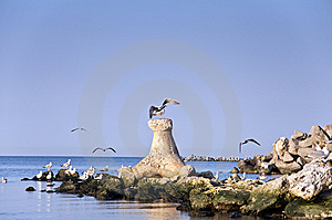 Sea Gull Rocks Colony Coast Line Sea Water Royalty Free Stock Photography - Image: 13609987