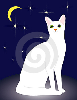 White Cat Royalty Free Stock Photography - Image: 13615307