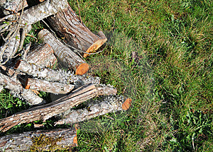Fire Wood On Grass Stock Photography - Image: 13620562