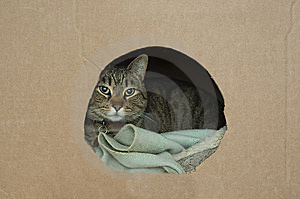 Kitty Inside Of Box Royalty Free Stock Photos - Image: 13620598