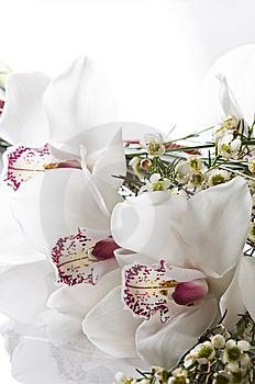 Orchid Stock Photography - Image: 13628452