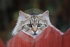 Hide And Seek Stock Photography - Image: 13628502