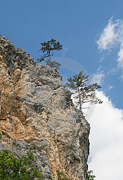 Pine-trees On A Cliff Royalty Free Stock Photo - Image: 13629165