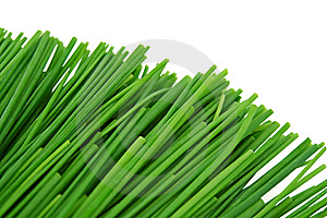 Green Onions Stock Image - Image: 13635291