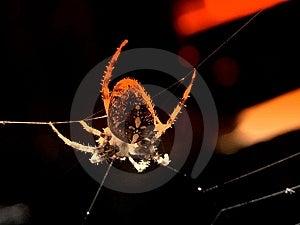 Danger Spider Background Royalty Free Stock Image - Image: 13643556