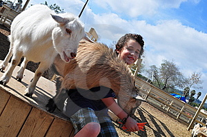 Boy Feeding Hungry Goats Royalty Free Stock Photo - Image: 13644925