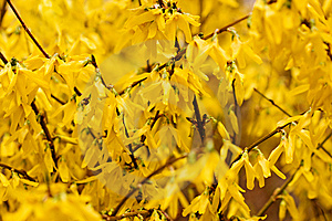 Yellow Flowers Background Stock Images - Image: 13647364