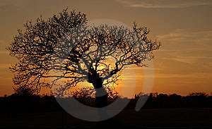 Tree At Sunset In Jersey Stock Images - Image: 13647694