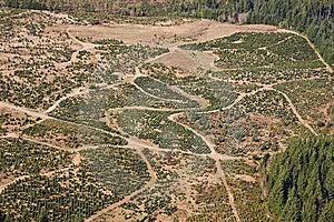 Tree Farm Stock Photos - Image: 13648393