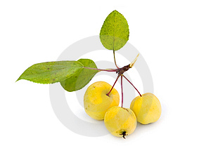 Wild Yellow Apples Stock Photography - Image: 13653562