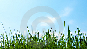 Green Grass And Blue Sky Stock Photos - Image: 13654403