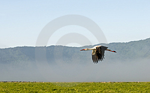 Stork Stock Image - Image: 13657171