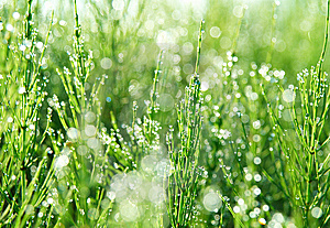 Green Grass Stock Images - Image: 13662434