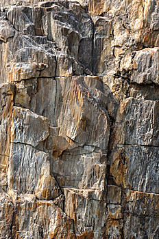 Texture Of Wooden Fossil As Rock Royalty Free Stock Photos - Image: 13666098