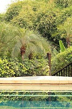 Pool In Jungle Stock Photo - Image: 13669310