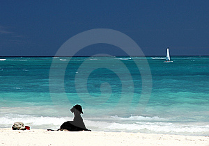 Black Labrador On White Sandy Beach Royalty Free Stock Photography - Image: 13677037