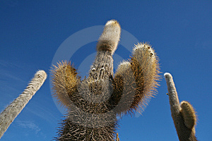 Cactus Against Blue Sky Royalty Free Stock Photo - Image: 13685185