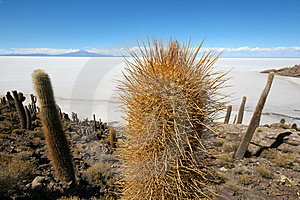 Incahuasi Island In Middle Of Uyuni Salt Flats Royalty Free Stock Photos - Image: 13685208