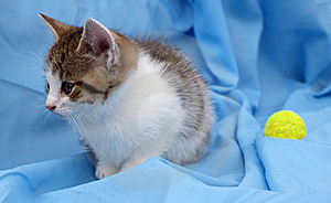 Sad Kitten Stock Image - Image: 13685421