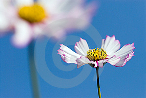 Cosmos In The Sky Stock Images - Image: 13685564