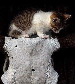 Scary Kitten Stock Photo - Image: 13696730