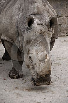 RHINOCEROS Royalty Free Stock Images - Image: 13698039
