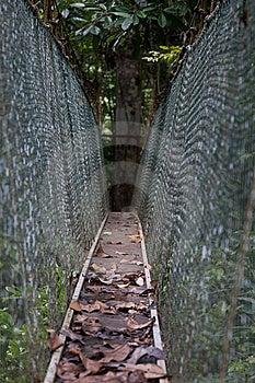 Canopy Walk Stock Image - Image: 13698191