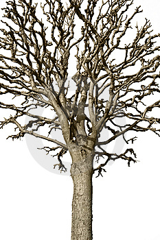 Bare Tree Stock Photography - Image: 13698902