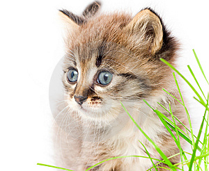 Beautiful Kitty Stock Image - Image: 13723471