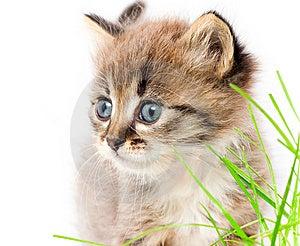 Beautiful Kitty Stock Image - Image: 13723471