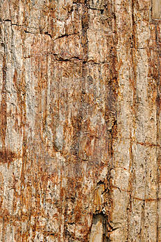 Texture And Color, Surface Of Wooden Fossil Stock Photo - Image: 13728470