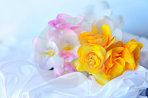 Freesias In Soft Focus Stock Photography - Image: 13728712