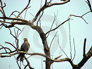 Bird Kite Royalty Free Stock Photos - Image: 13732498