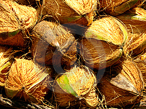 Coconuts Stock Photography - Image: 13732962