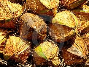 Noix De Coco Photographie stock - Image: 13732962