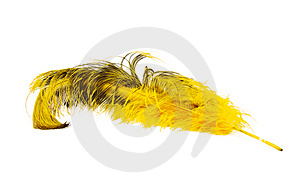 Bright Yellow Ostrich's Feather Stock Photos - Image: 13735893